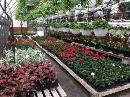 Annuals and Hanging Baskets