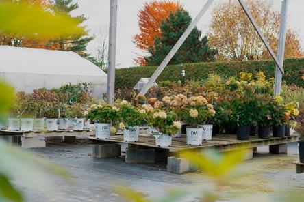 Hydrangeas and various shrubs