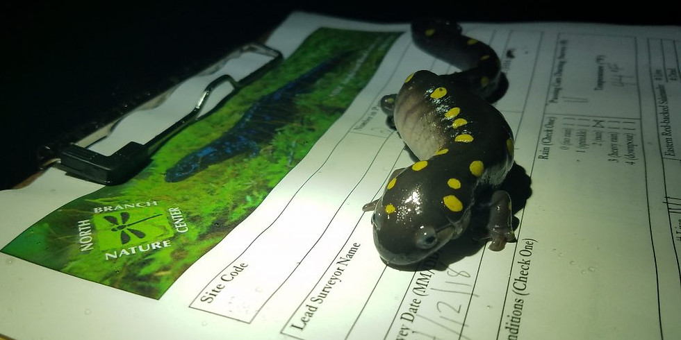 Amphibian Ecology and Road Rescue Training