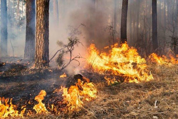 Информация о пожарах в Асбестовском городском округе за  восемь месяцев 2021 года.