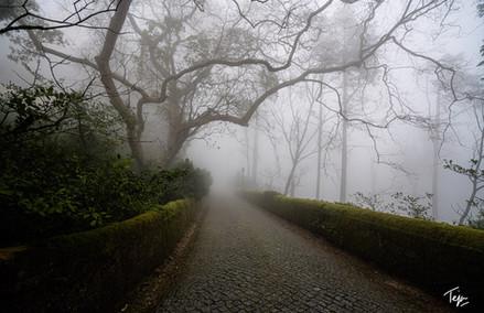 Road to Narnia
