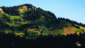Of Swiss Hills and Meadows