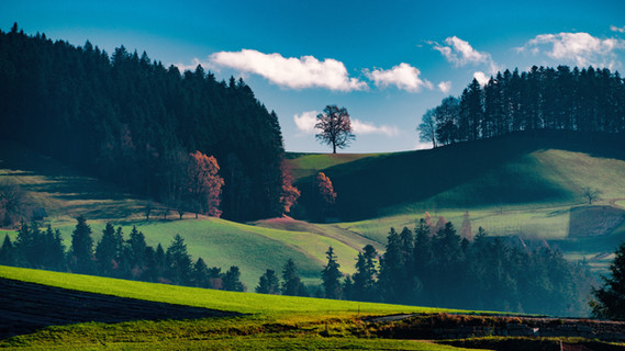 The Great Tree of Emmental