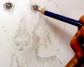 pet portrait from photo poodle drawing
