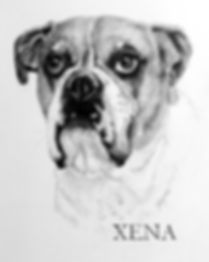 boxer pencil drawing.jpg