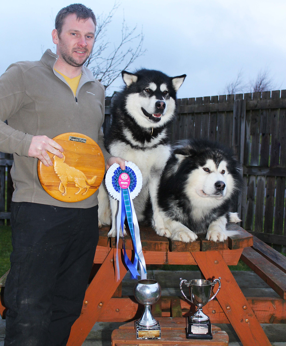 BlackSummit Alaskan Malamutes UK