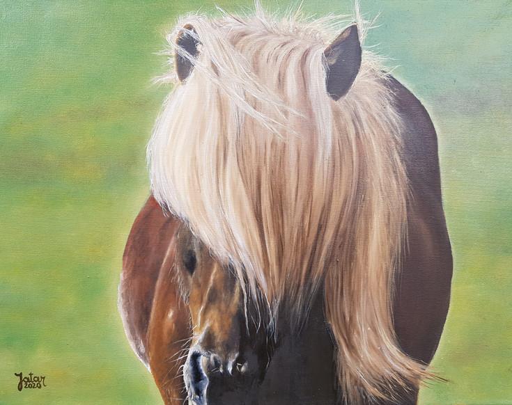 Horse Boop
