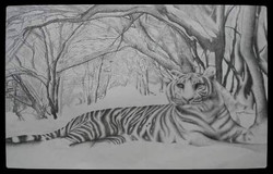 Series Animals.  White Tiger