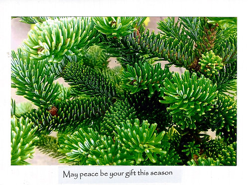 May peace be your gift this season
