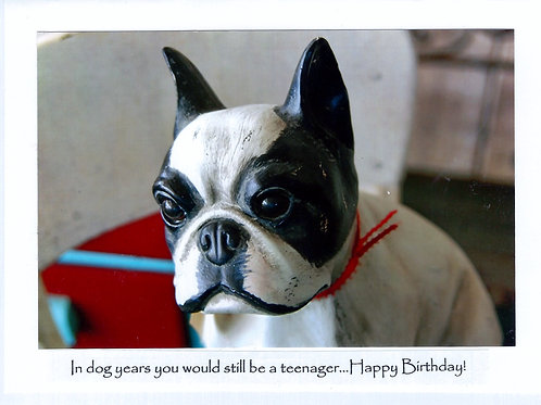 In dog years you would still be a teenager...Happy Birthday!