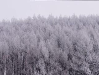 樹氷・・・霧が樹に着いて育っていく氷のことです