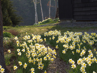 春の大型連休、ゴールデンウイークの営業について