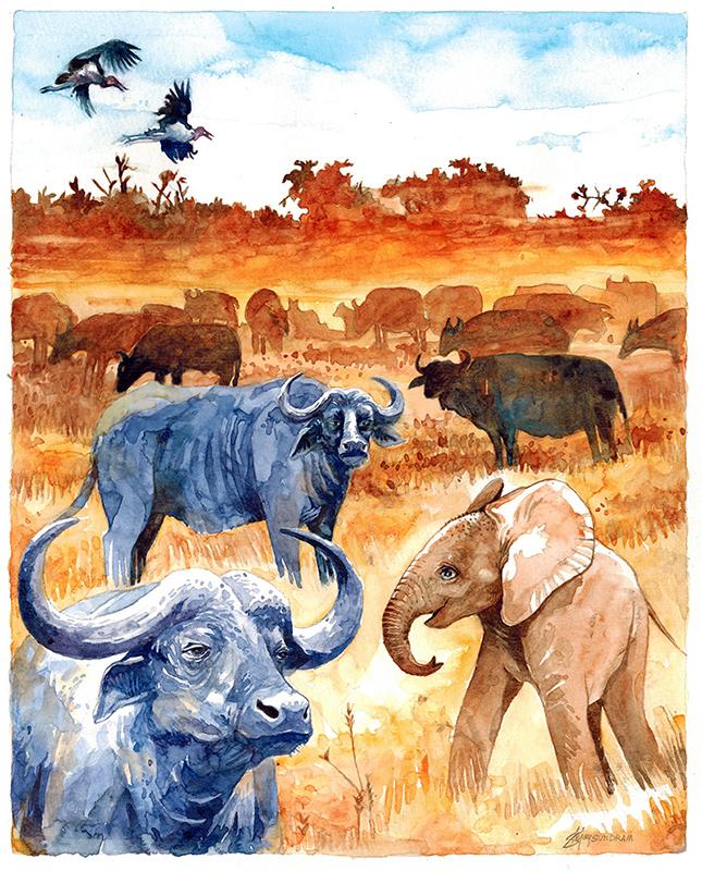 Buffaloes in Tsavo