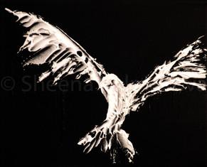The Crows VI