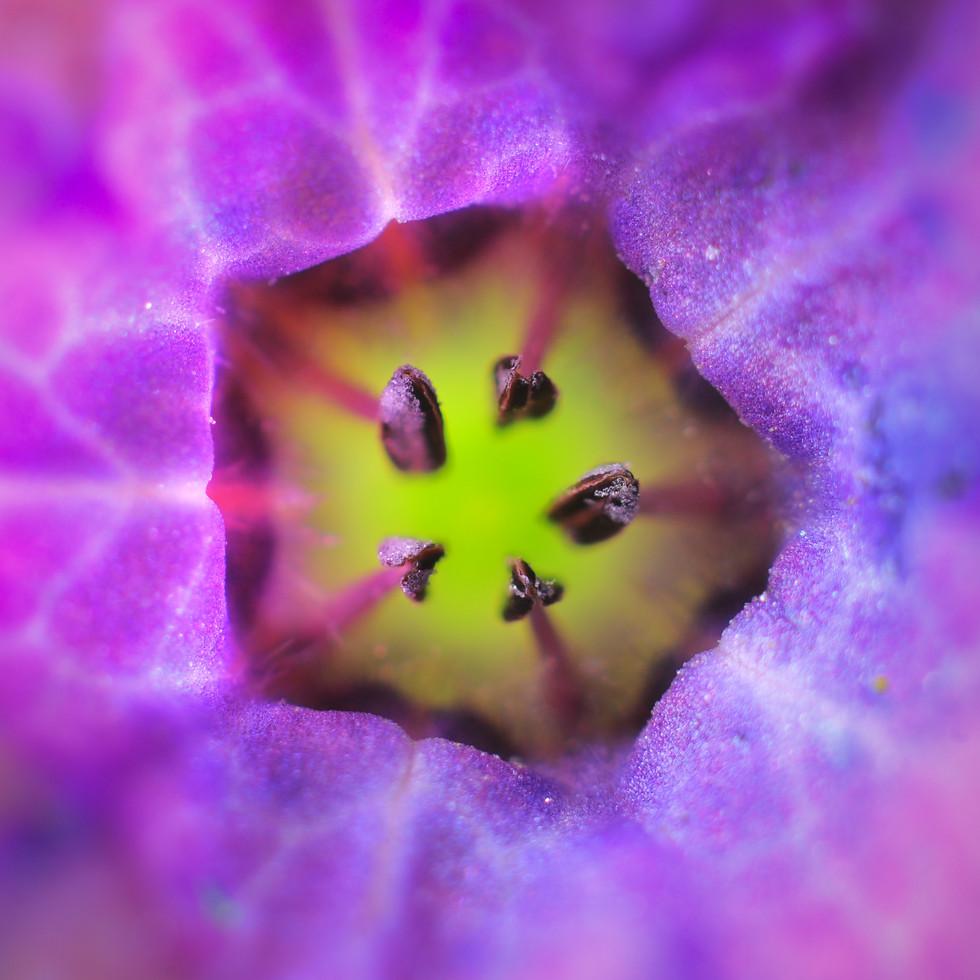 macro_jim-gregory_flower_small