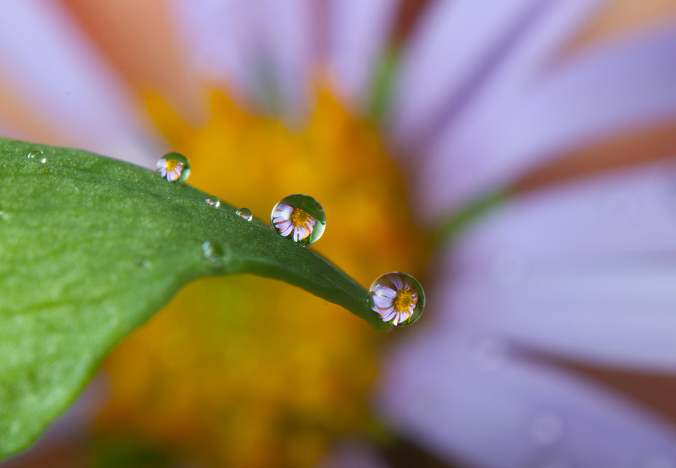 macro_jim-gregory_flower_small2