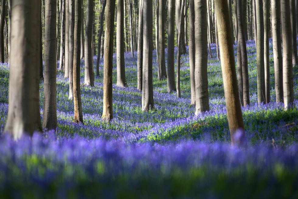 bluebells_hills.jpg