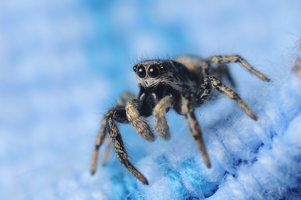 macro_jim-gregory_spider_small