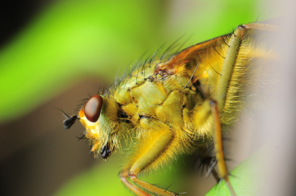 macro_jim-gregory_fly_small2
