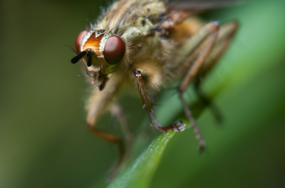 macro_jim-gregory_fly_small5