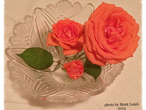 Reflects: Smelling the Roses