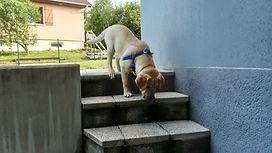 Paddy et les escaliers.JPG