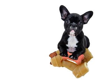 offre commerciale pour chiens.jpg