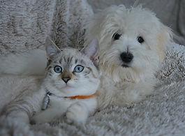 chien,_chat,_apaisés.jpg