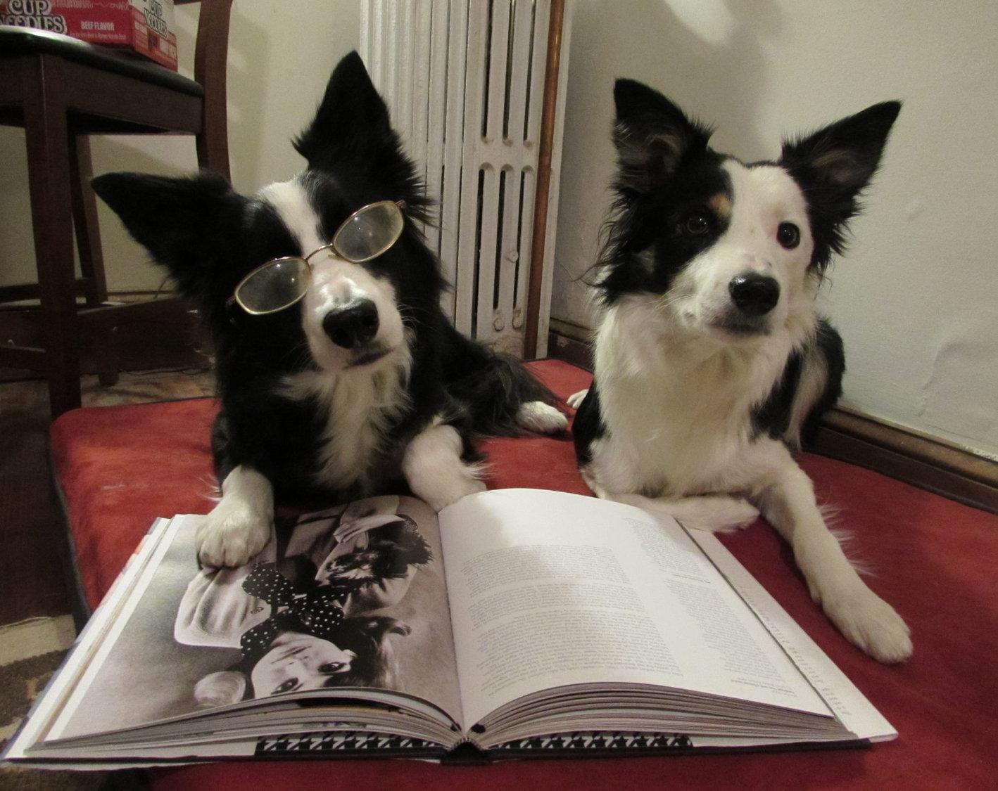 Seminars for primary care veterinarians