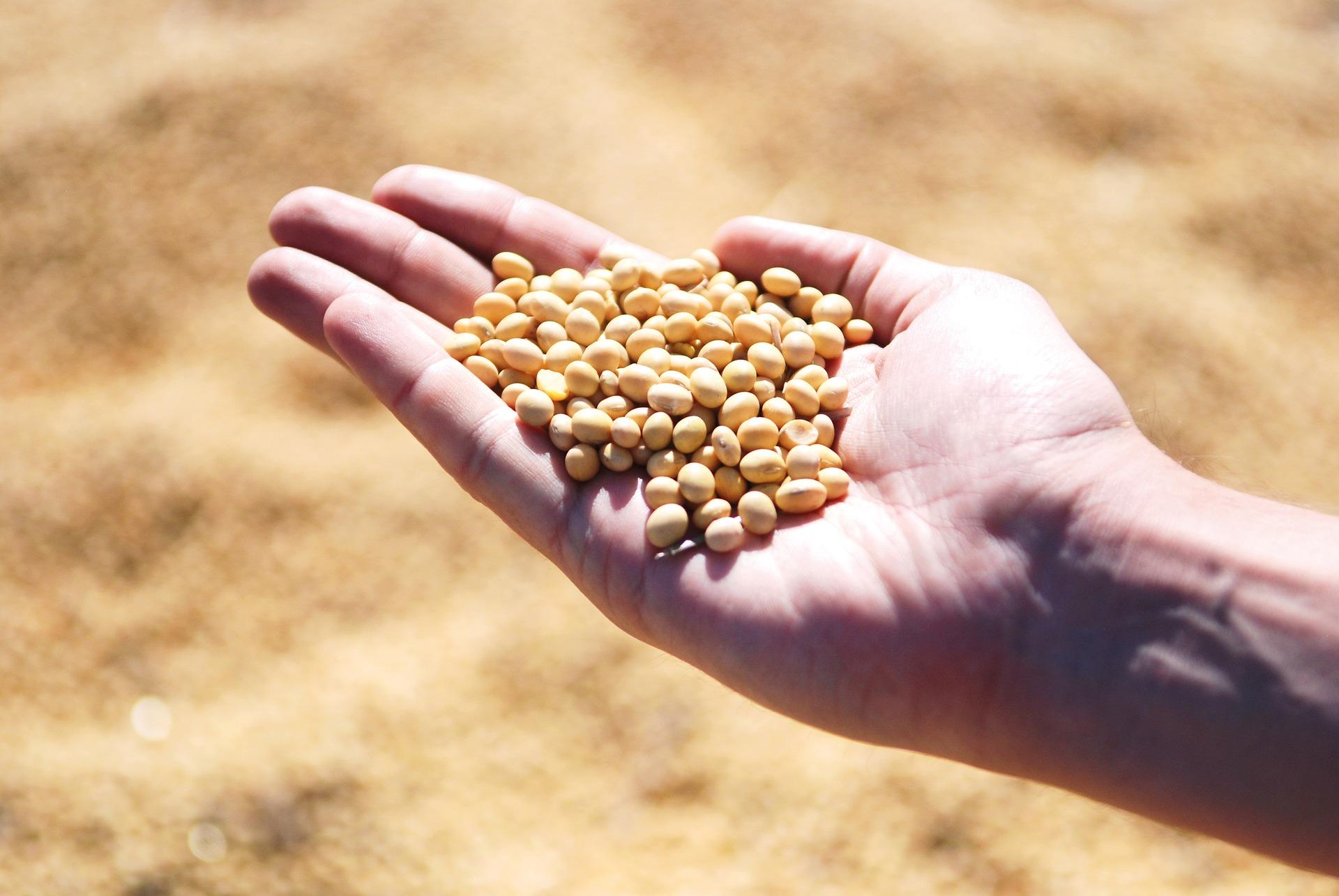 soybean-1831704_1920.jpg