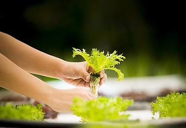 hydroponics-4684821__340.webp