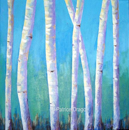 """Maine White Birch, 24"""" x 24"""""""