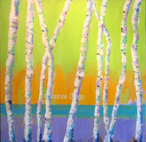 """Maine White Birch 2, 24"""" x 24"""""""