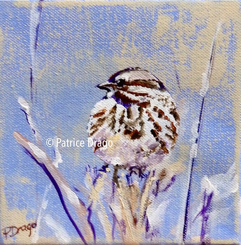 Winter Sparrow, original bird painting, acrylic on canvas by East Coast Fine Artist Patrice Drago