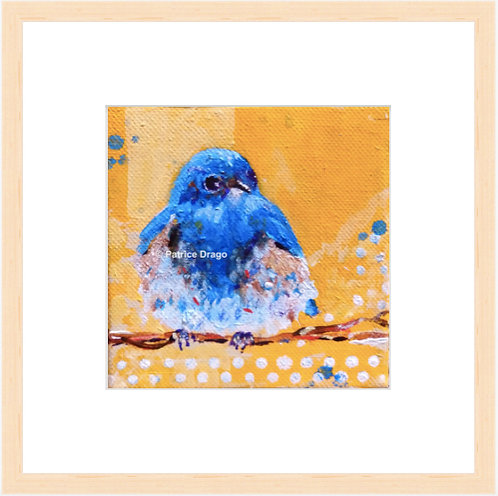 Mountain Bluebird - framed print