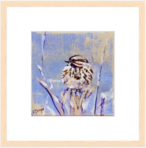 Winter Sparrow - framed print