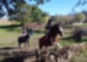 gîte ferme équestre les chevaux d'en belaval