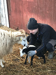 Jonas_och_fåren.jpeg