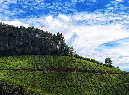 Beyond the ordinary: An evening in the Highest Tea Estate of the World