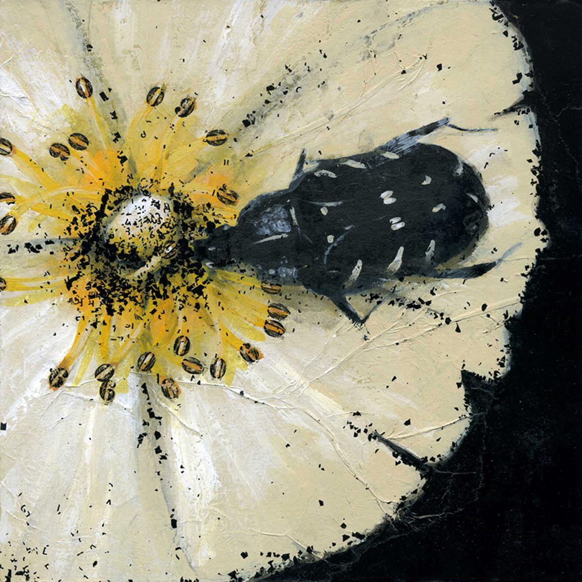Scarabée sur fleur
