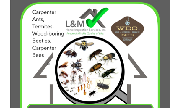 Pest/Wood Destroying Organisms (WDO) WITH Home Inspection