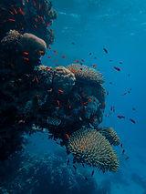 Coral%20reef_edited.jpg
