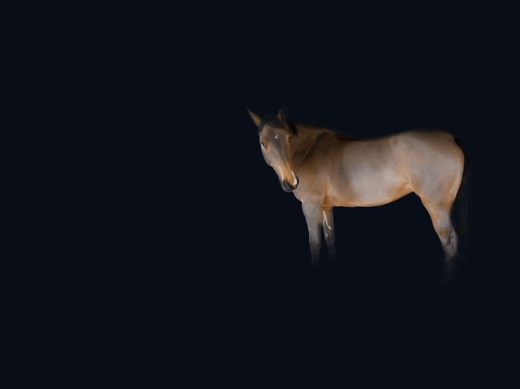 surveiller et détecter sugnes coliques chez le cheval