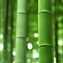 bambou chateauhourtinducasse.jpg