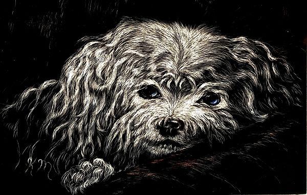 Deanna's Dog.jpg