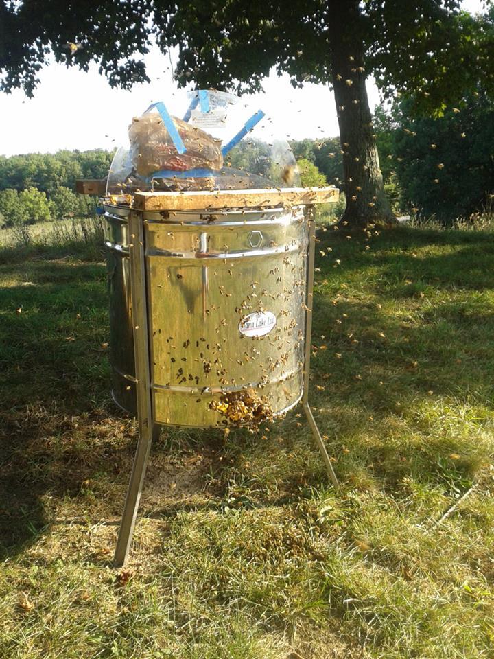 honeyspinner.jpg