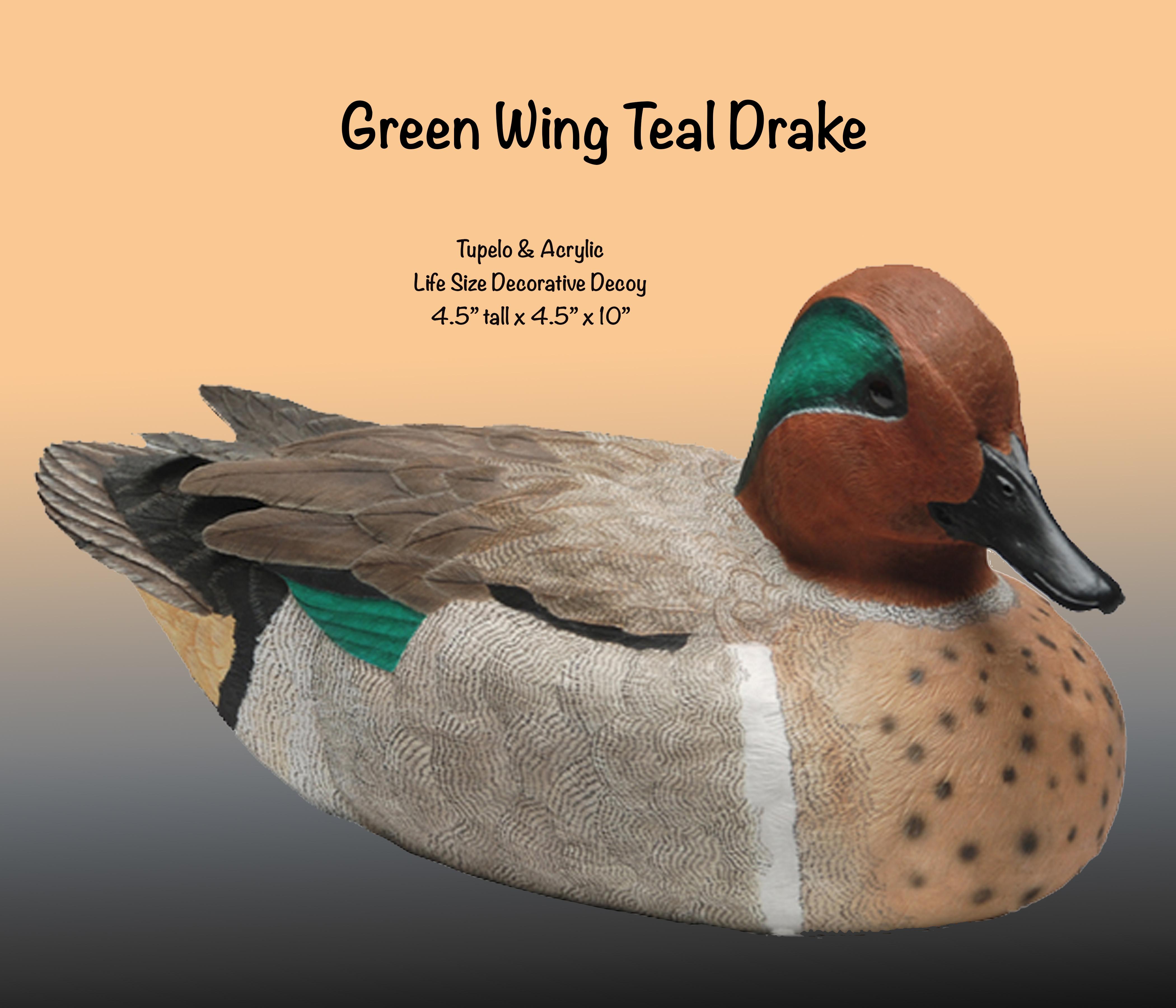 Green Wing Teal Drake
