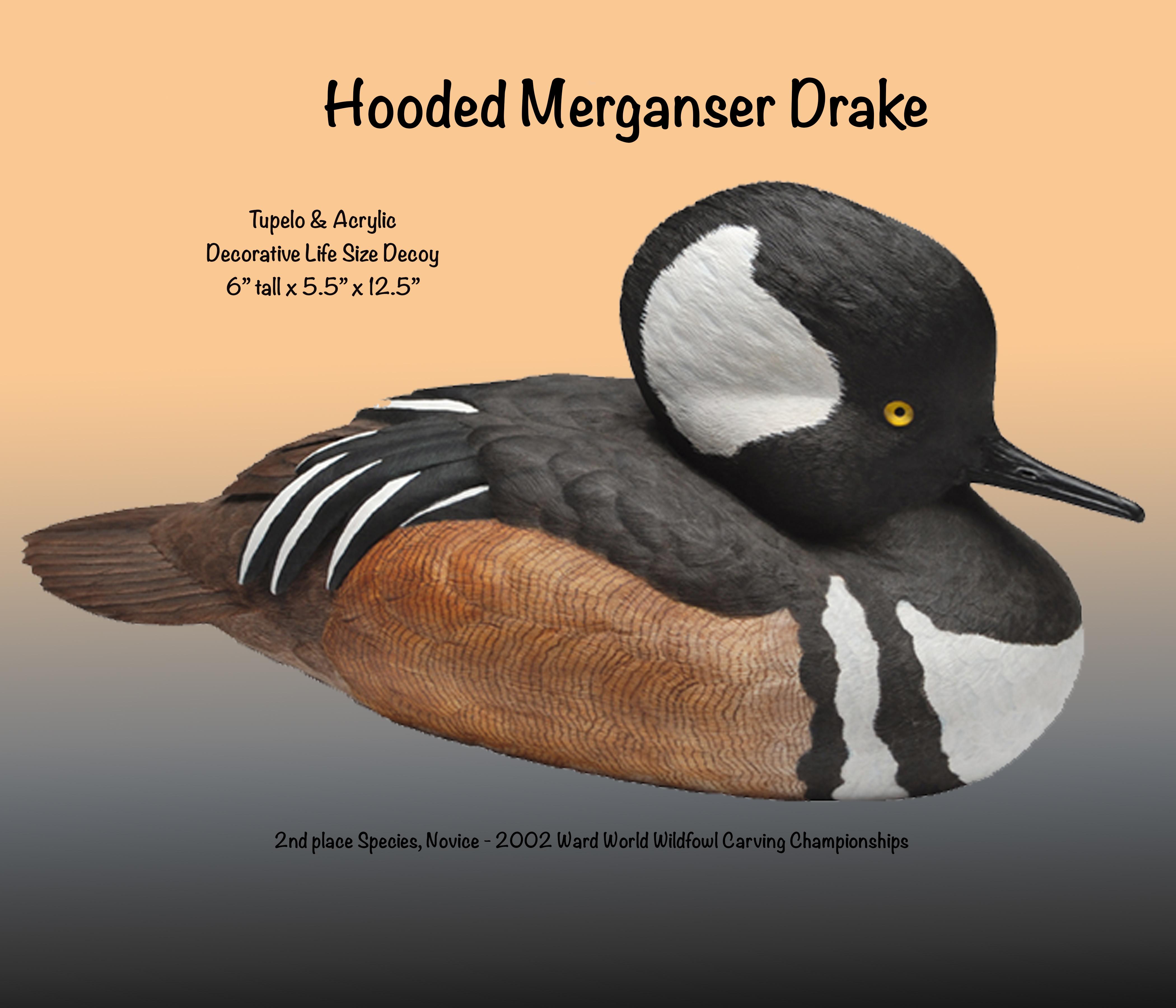 Hooded Merganser Drake