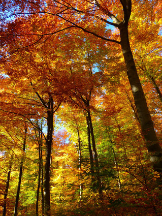 La saison des couleurs