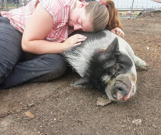 Local Pig Rescue Is A Sanctuary For Impulse Buyers
